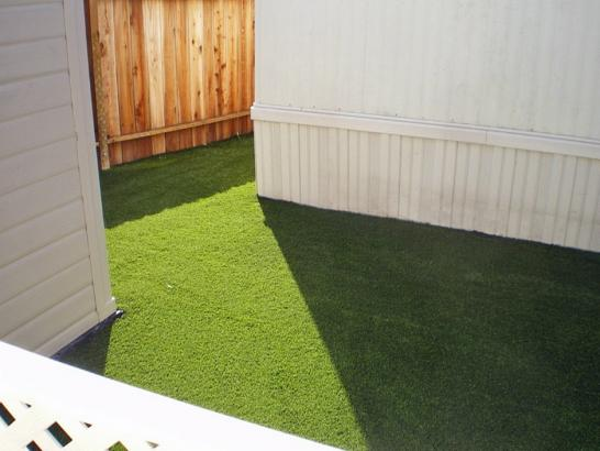 Artificial Grass Photos: Lawn Services Log Lane Village, Colorado Pictures Of Dogs, Backyard Ideas