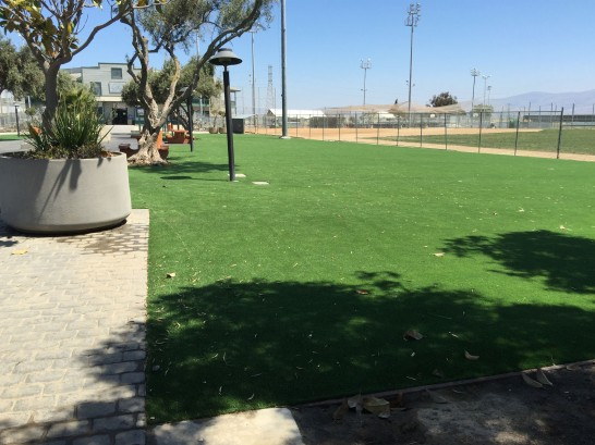 Artificial Grass Photos: Plastic Grass Olathe, Colorado Garden Ideas, Commercial Landscape