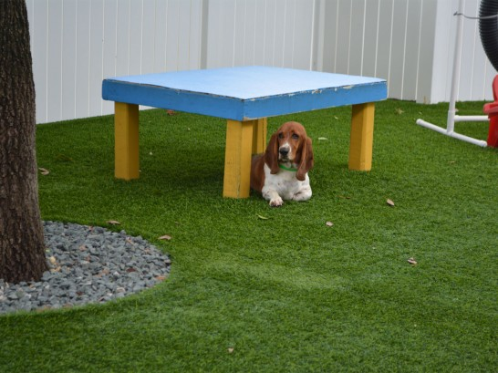 Synthetic Grass Cost South Fork, Colorado Pet Grass, Dogs Runs artificial grass