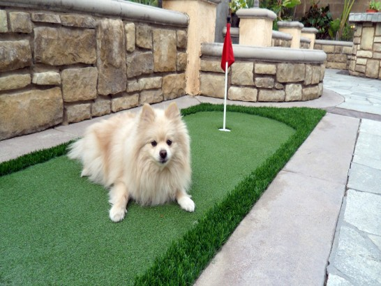 Artificial Grass Photos: Synthetic Turf Supplier Marble, Colorado Putting Green Carpet, Backyard Makeover